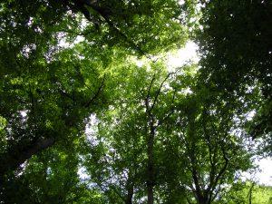 Solextour Vlaardingen De bovenkant van bomen met een stuk van de lucht.